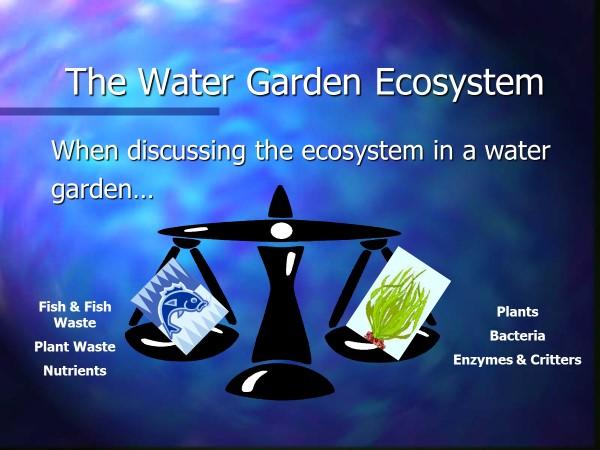 Water Garden Ecosyatem